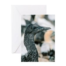 Cape gannet chick Greeting Card