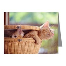 Kittens in basket. Note Cards (Pk of 20)