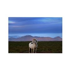 Lone horse on windy evening Rectangle Magnet