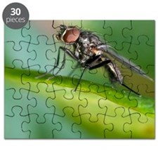 Fly on leaf Puzzle