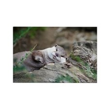 Oriental small-clawed otter sunba Rectangle Magnet