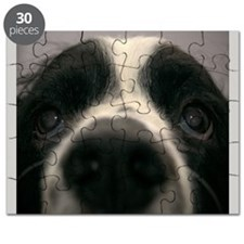 Springer Spaniel Dog Face and eyes. Puzzle
