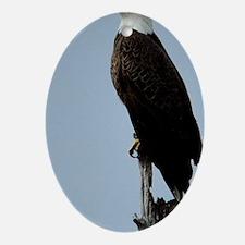 Bald Eagle Oval Ornament