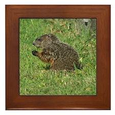 Young Groundhog Framed Tile