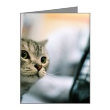 Cat is peeping Note Cards (Pk of 10)