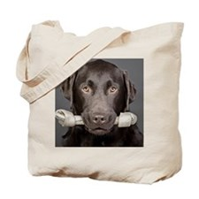 Studio portrait of chocolate labrador car Tote Bag