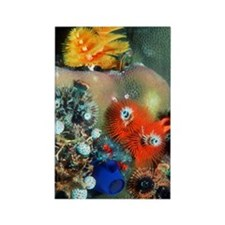 Christmas tree worms Rectangle Magnet