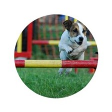 """Dog Agility Jack Russell Terrier 3.5"""" Button"""