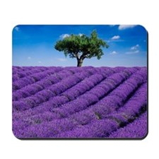 Lavender field in summer with one tree.  Mousepad