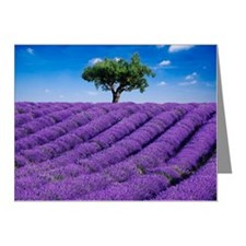 Lavender field in summer wit Note Cards (Pk of 20)