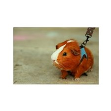 Guinea Pig on A Leash Rectangle Magnet