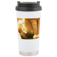 Cat sitting in sun Travel Mug