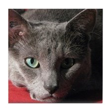 Russian blue cat on red pillow Tile Coaster