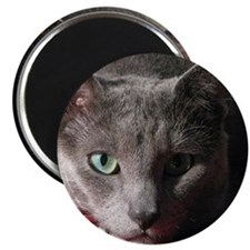 Russian blue cat on red pillow Magnet