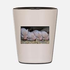 Cute Piglet Shot Glass