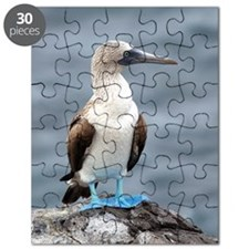 Blue footed booby Puzzle