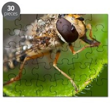 Hoverfly Puzzle
