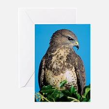 Common buzzard Greeting Card