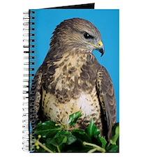 Common buzzard Journal