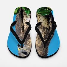Common buzzard Flip Flops