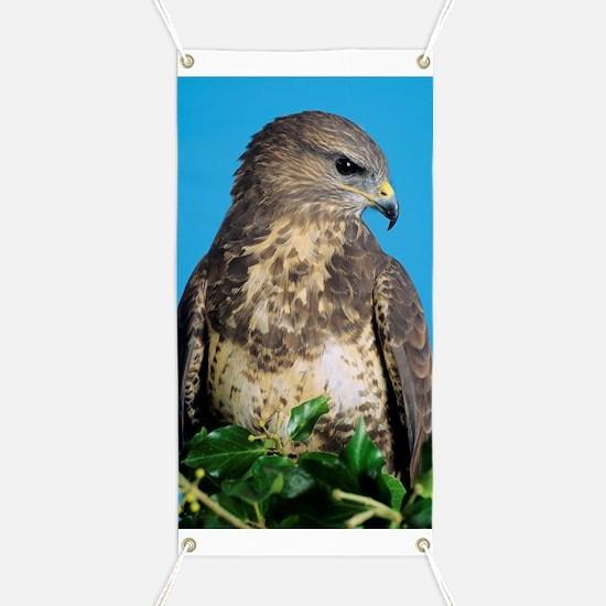 Common buzzard Banner