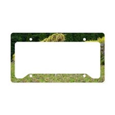 Rice field License Plate Holder