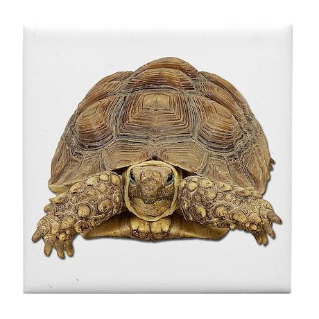 Tortoise Photo Tile Coaster