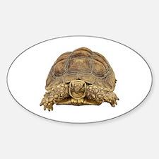 Tortoise Photo Sticker (Oval)