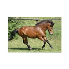 Icelandic horse Rectangle Magnet
