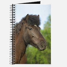 Icelandic horse Journal