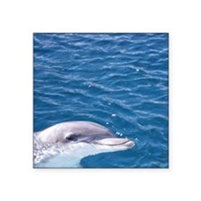 "Dolphin in water Square Sticker 3"" x 3"""