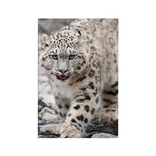 Snow leopard Rectangle Magnet