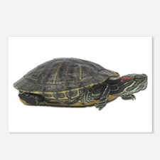 Red Ear Slider Photo Postcards (Package of 8)