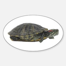 Red Ear Slider Photo Oval Decal