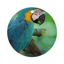 Blue and gold macaw Round Ornament