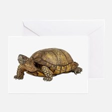 Box Turtle Greeting Cards (Pk of 10)