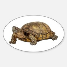 Box Turtle Oval Decal