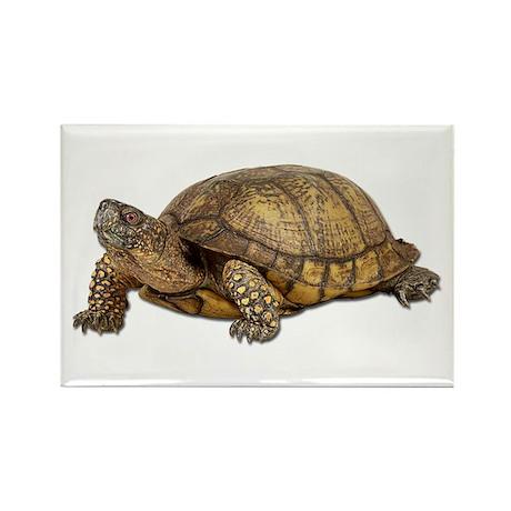 Box Turtle Rectangle Magnet
