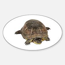 Blandings Turtle Oval Decal