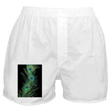 Black and green Peacock Feather Curta Boxer Shorts
