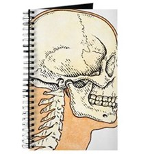 Illustration of skull and profile of adult Journal