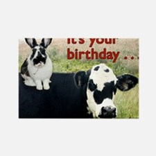 Bunny  Cow Birthday Card Rectangle Magnet
