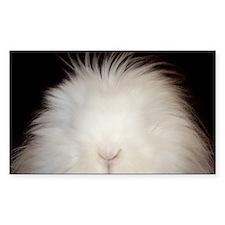 Bunny Card Decal
