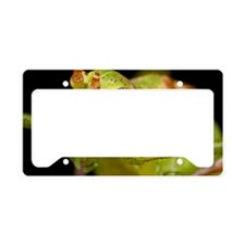Bush cricket License Plate Holder