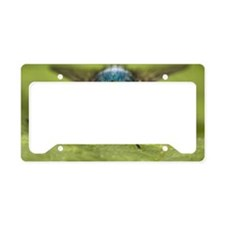 Blow-fly License Plate Holder