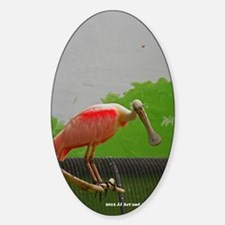 Spoonbill Decal