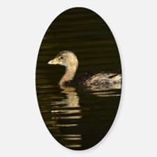 Pied-billed Grebe Decal
