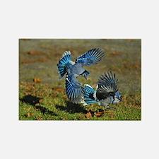 2 Blue Jays Rectangle Magnet