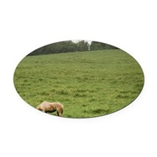 Horse in field Oval Car Magnet