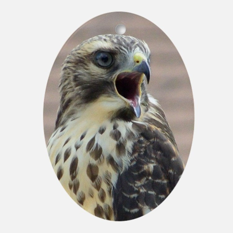 Red-tailed Hawk Oval Ornament